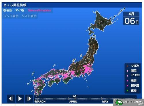 Weather News_Sakura Simulator_03