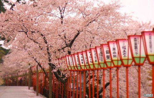 Туристов в Японии становится больше